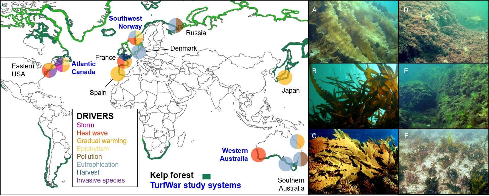 Turf Wars: The New Battle Front of Globally Declining Kelp Forests ...
