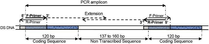 medium_pcr_amplicon_figure_1